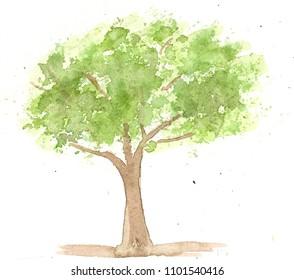hand drawn watercolor green tree