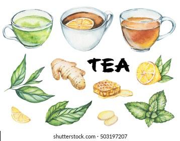 Hand drawn watercolor illustration: Ginger, lemon. mint. tea leaves, herbs, honey, green, black tea. Isolated on white