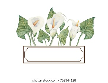 Hand drawn watercolor illustration. Text frame with calla flowers.