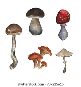 Hand drawn watercolor mushroom isolated on white
