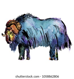 Hand drawn watercolor musk ox in cute doodle style.