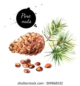 Hand drawn watercolor painting of pine nuts isolated on white background. Illustration of nut for your design