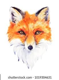Hand drawn watercolor red fox portrait.