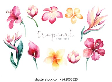Hand drawn watercolor tropical flower set . Exotic palm leaves, jungle tree, brazil tropic botany elements and flowers. Perfect for fabric design. Aloha collection.