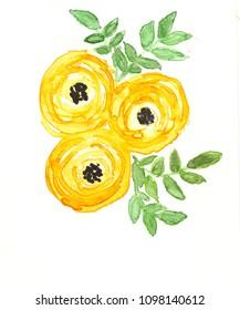Hand drawn watercolor yellow  ranunculus flower