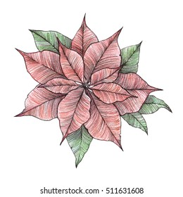 Hand drawn watercolour illustration - Merry Christmas poinsettia. Isolated on white background. Perfect for invitations, greeting cards, blogs, posters etc