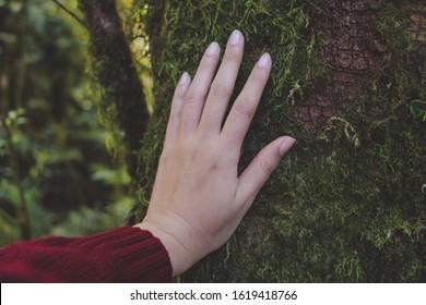 Main d'écologiste touchant le tronc d'arbre couvert de mousse. symbolisant le lien entre l'homme et la nature.