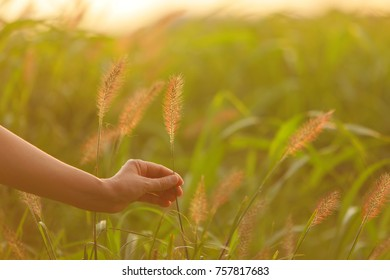 Hand extending to the shining grass in the setting sun