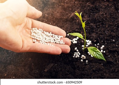 hand of a farmer giving fertilizer to new green plant in soil