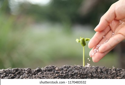 hand of a farmer giving fertilizer to young green plants / nurturing baby plant with chemical fertilizer on green bokeh background