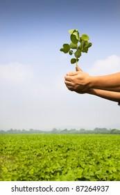 hand of farmer holding sapling on the farm