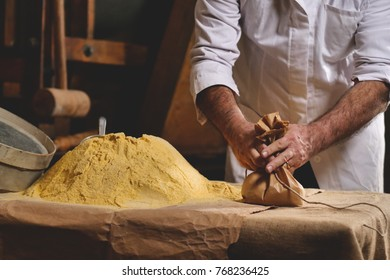 A hand of a farmer takes a handful of yellow flour, to feel the quality and the essence of the raw material. Concept of: tradition, agriculture, flour, love for nature.