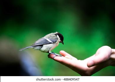Hand feeding a bird