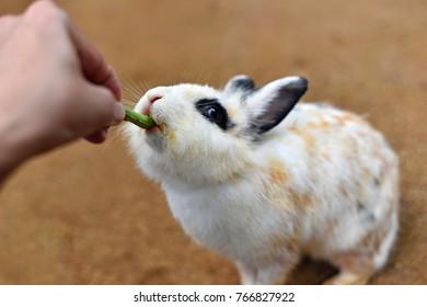 Hand feeding a rabbit