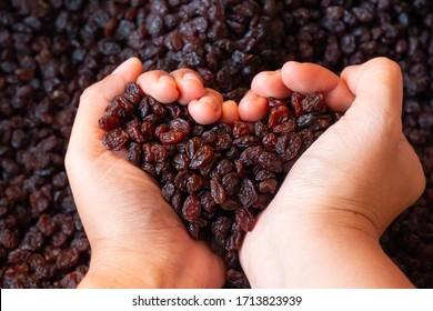 Hand of female holding of dry raisins and dry raisins background