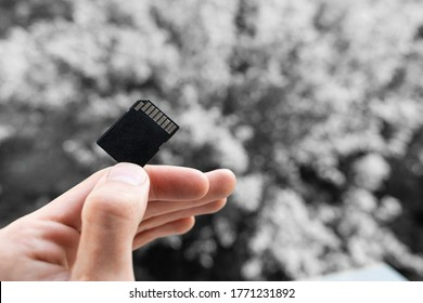 hand and finger hold SD memory card on a gray backgorund. hand holds a black memory flash card