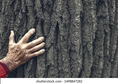Hand with fingers of a senior over 80 years old. Hand is touchung a very old tree. Comparison of old man and old tree.