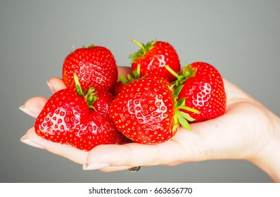 Hand full of big red fresh ripe strawberries isolated towards gray colored backdrop