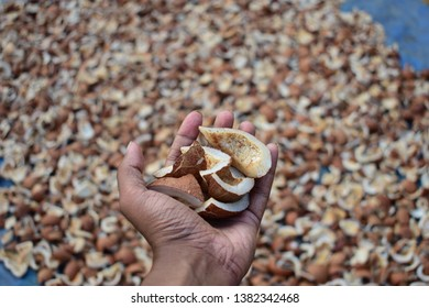 A hand full of dried coconuts.these are the ones uses for making cocunut oil.