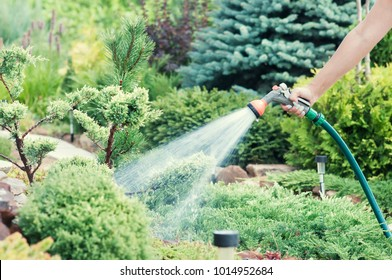 Hand garden hose with water spray, watering flowers, close-up, water splashes, landscape design, alpine slide