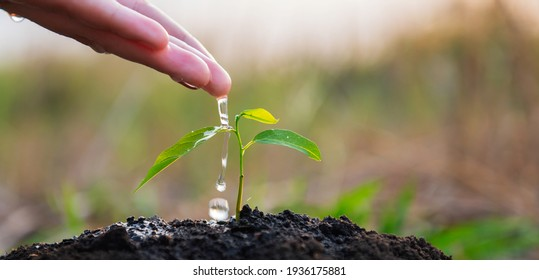 hand of gardener  pouring water at young tree for planting. eco environment concept