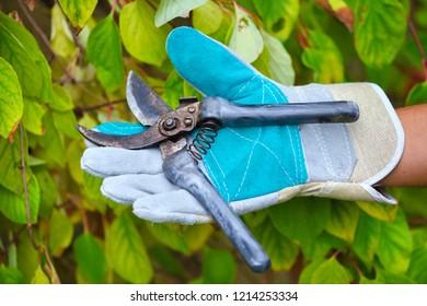 Hand of gardener with secateurs for working in the garden