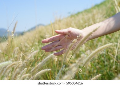 Hand gentlely touches the grass field