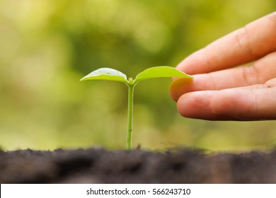 Hand gently touching a young baby plant growing on fertile soil with green background / Love nature