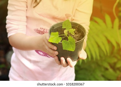 Hand of girl carrying a pot of young Ivy gourd.In the morning with warth sunlight.Concept of natural classroom, child learning by doing.