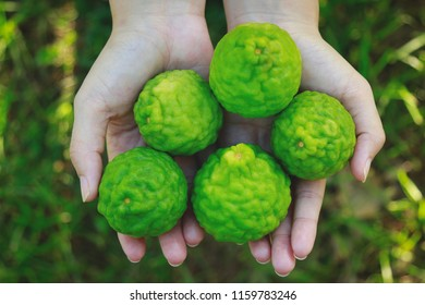 Hand girl holding bergamot fruit from garden, raw organic herbal treatment for good living life concept, top view