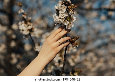 Hand of girl with ring touches spring flowering blossom tree. Engagement.