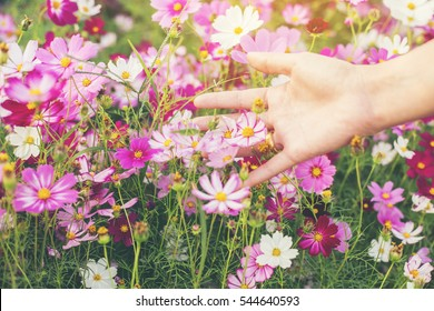 hand of a girl touch flower