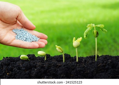 hand giving chemical fertilizer to plants growing in sequence of seed germination on soil, evolution concept