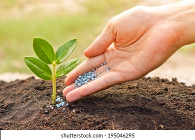 a hand giving fertilizer to a young plant with warm sunlight / planting tree