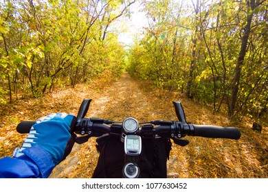 Hand in glove holding handlebar of a bicycle in autumn forest. View from bikers eyes