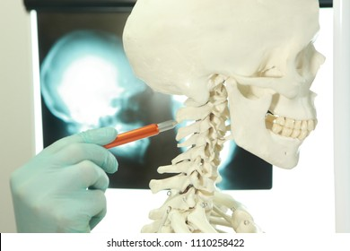 hand in glove pointing at cervical spine section of human skeleton model
