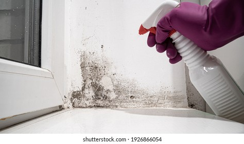 hand in glove sprays the product on angle between door and white wall from black mold.dangerous fungus that needs to be destroyed.It spoils look of house and is very harmful parasite for human health