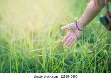 hand with grass