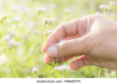 hand and grass  .soft focus