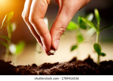 Hand growing seeds on sowing soil at the garden, agriculture concept.