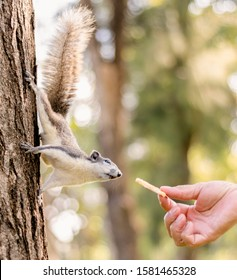 The hand is handed the snack to the gray squirrel standing on the tree in the city park. Do not feed the animals concept.