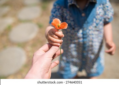 Hand handing the Poppies