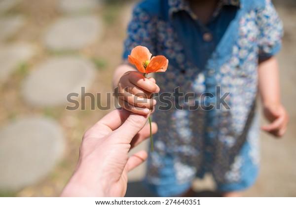 Hand handing the Poppies