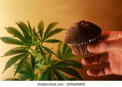 Hand hold chocolate muffin with cannabis. CBD food. Medical marijuana. Anxiety treatment