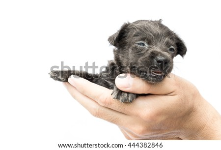 Hand Hold Cute Baby Dog Black Stock Photo Edit Now 444382846