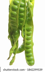 hand hold Petai or Sataw of the genus Parkia Speciosa in isolated white background.