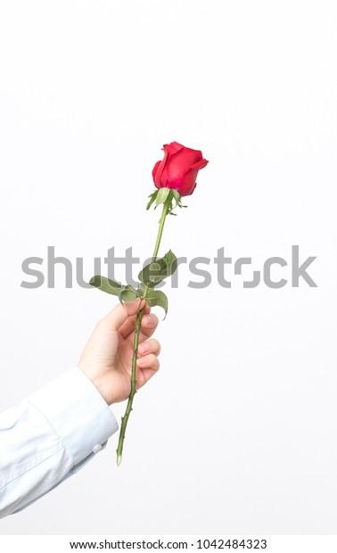 Hand Hold Rose Flower