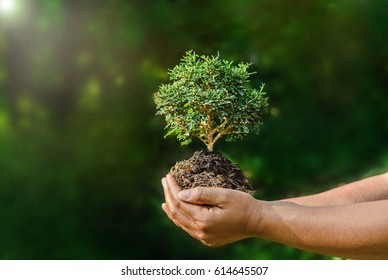 hand hold small plant on green background and sunshine