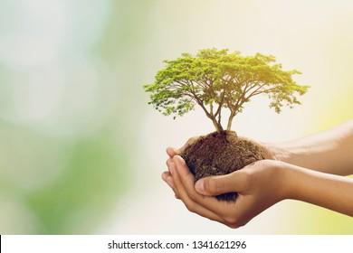 hand holdig big tree growing on green background