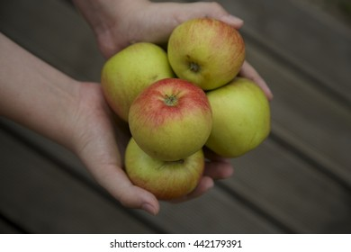Hand holding apples, gray wooden background,
